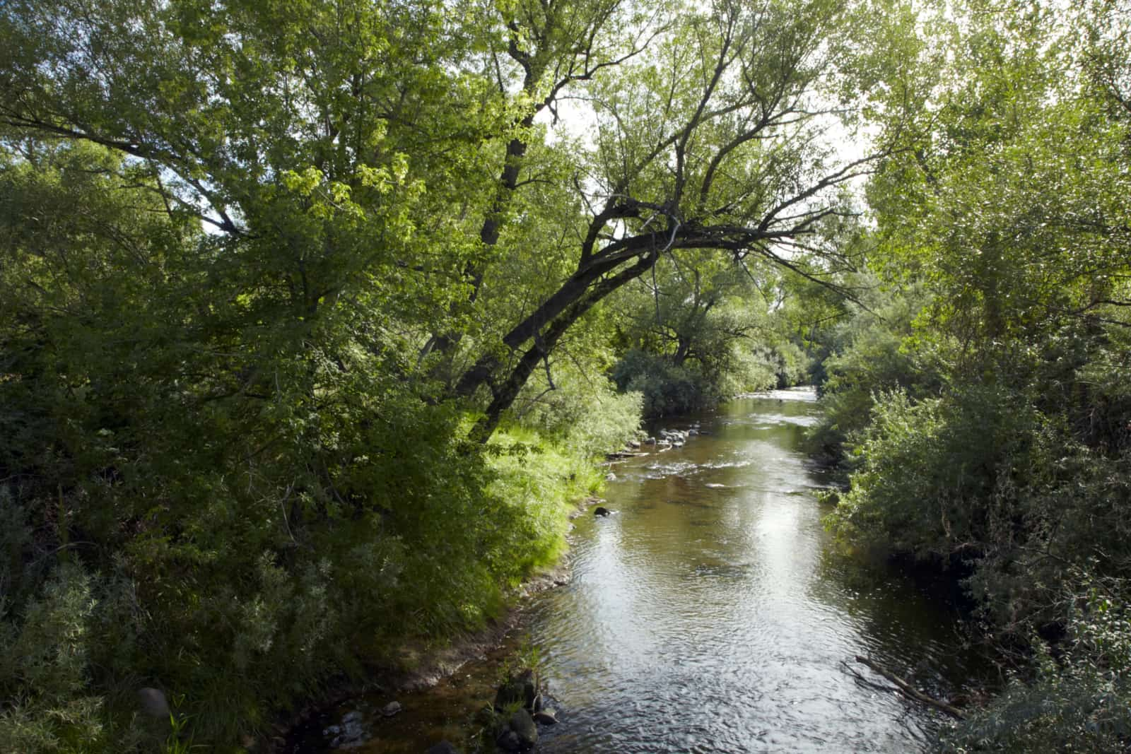 view of the river surrounded by lush green bushes and trees.